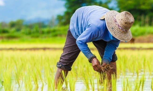 Υπουργικό: Καταβολή γεωργικών αποζημιώσεων ύψους €2,6 εκ.