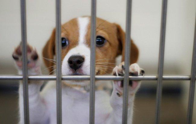 Έκαψαν καταφύγιο σκύλων - Τι λέει το Κόμμα για τα Ζώα