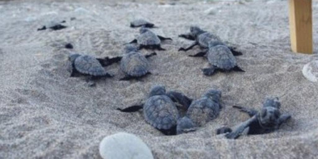 Έκαναν 8 μήνες να απαντήσουν για πάρτι σε φωλιές χελωνών